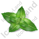 Herb Mint Icon