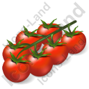 Vegetable Cherry Tomato Icon