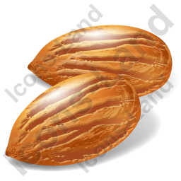 Nut Almond Icon