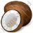 Nut Coconut Icon