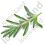 Herb Rosemary Icon