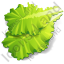 Vegetable Lettuce Icon