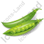 Vegetable Pea Icon