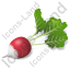 Vegetable Radish Icon
