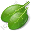 Vegetable Spinach Icon