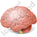 Brain Icon, PNG/ICO, 128x128