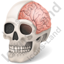 Skull Brain Icon, PNG/ICO, 128x128