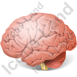 Brain Icon, PNG/ICO, 256x256