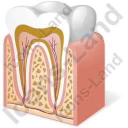 Tooth Anatomy Icon