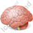 Brain Icon, PNG/ICO, 48x48