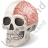 Skull Brain Icon, PNG/ICO, 48x48