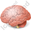 Brain Icon, PNG/ICO, 64x64