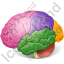 Brain Anatomical Regions Icon