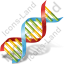 DNA Icon, PNG/ICO, 64x64