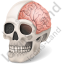 Skull Brain Icon, PNG/ICO, 64x64