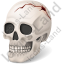 Skull Injury Icon